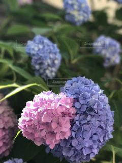 花の写真・画像素材[561572]