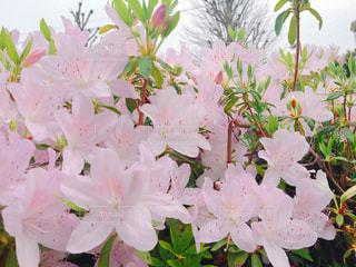 花の写真・画像素材[561593]