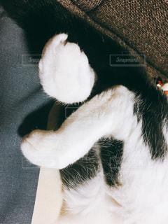 白黒猫の足のアップの写真・画像素材[926145]