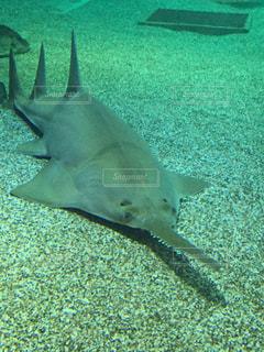 水面下を泳ぐ魚たちの写真・画像素材[1645772]