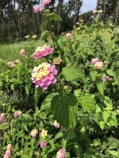 花園のクローズアップの写真・画像素材[3564193]