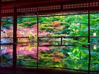 秋の窓の写真・画像素材[1506617]
