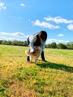 柴犬 公園の写真・画像素材[1556373]