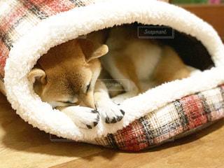 ベッドの上で横になっている犬の写真・画像素材[1564614]