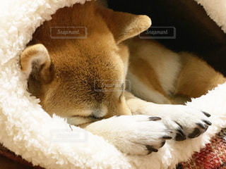 ぬくぬくベッドの写真・画像素材[1564615]