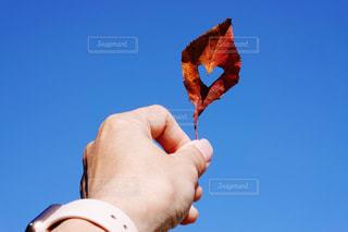 ハート 冬 紅葉 青空 1の写真・画像素材[1626321]