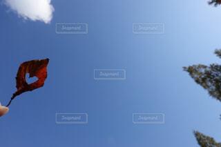 ハート 冬 紅葉 青空 5の写真・画像素材[1627770]