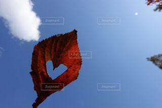 ハート 冬 紅葉 青空 6の写真・画像素材[1627771]