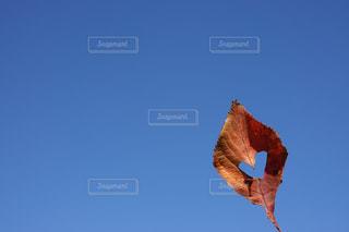 ハート 冬 紅葉 青空 14の写真・画像素材[1627843]