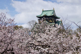 大阪城 桜の写真・画像素材[2180867]