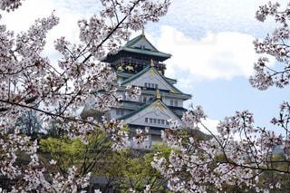 大阪城 桜の写真・画像素材[2180872]