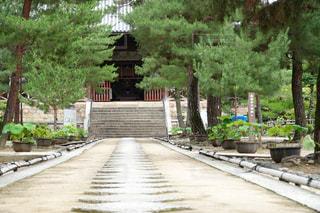 京都 宇治 萬福寺の写真・画像素材[2429602]