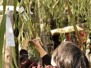 京都 頂法寺 六角堂 おみくじ 柳の写真・画像素材[2794974]