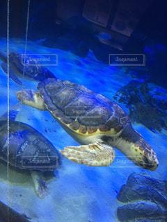 水族館の写真・画像素材[561806]