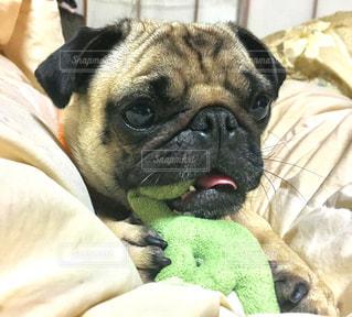 犬の写真・画像素材[561354]