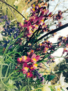 近くの花のアップの写真・画像素材[1059834]