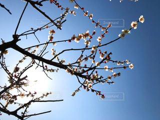 木の枝に止まっている鳥たちの群れの写真・画像素材[1060440]