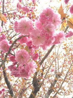 花の写真・画像素材[564960]