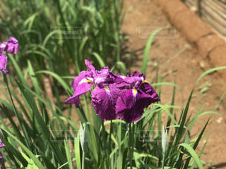 花の写真・画像素材[562513]