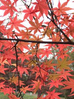 秋の写真・画像素材[586510]