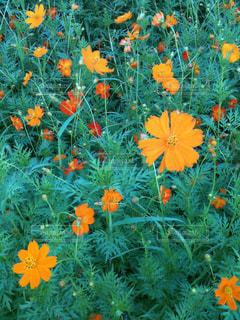 花の写真・画像素材[587898]