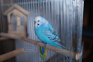 鳥の写真・画像素材[587902]