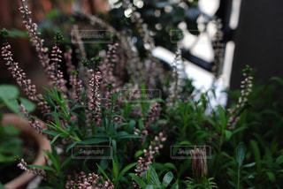 花の写真・画像素材[587904]