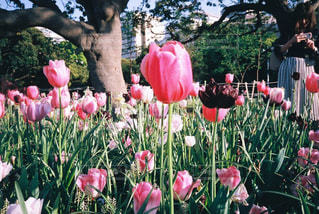 花の写真・画像素材[562765]