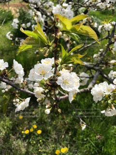 花の写真・画像素材[562924]