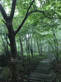 森林の写真・画像素材[580073]