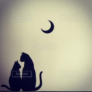猫の写真・画像素材[564086]