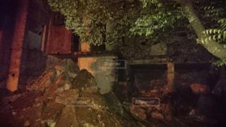 木の写真・画像素材[563210]