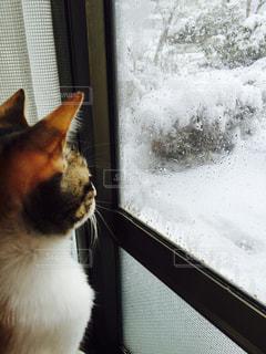 猫の写真・画像素材[563655]
