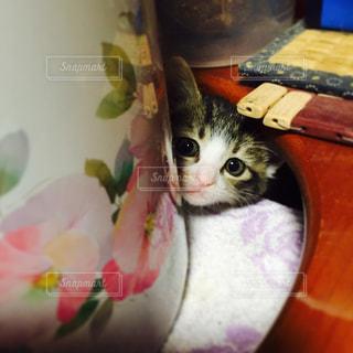 猫の写真・画像素材[563658]