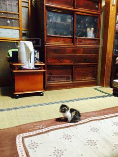 猫の写真・画像素材[563660]