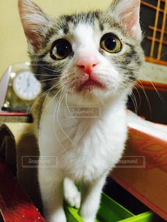 テーブルの上に座って猫の写真・画像素材[998256]