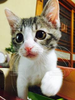 近くに猫のアップの写真・画像素材[998257]