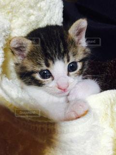 近くに猫のアップの写真・画像素材[998262]