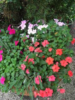 花の写真・画像素材[563802]