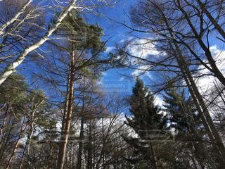 フォレスト内のツリー - No.991791