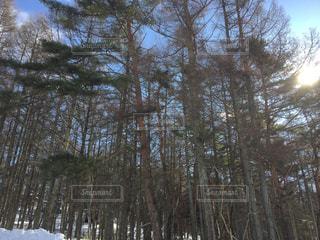 雪に覆われた森をスキーに乗る男 - No.1001035