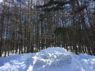 雪に覆われた森に立っている人 - No.1001036