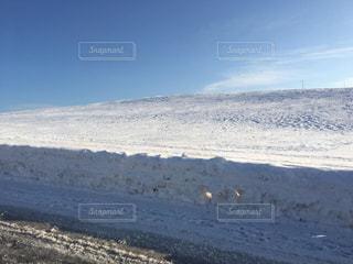 雪に覆われた斜面 - No.1017352