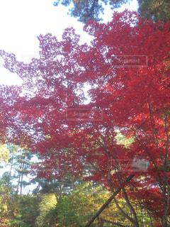 フォレスト内のツリー - No.1021522