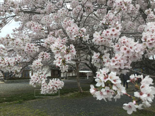 自然の写真・画像素材[565903]