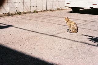 猫 - No.564193
