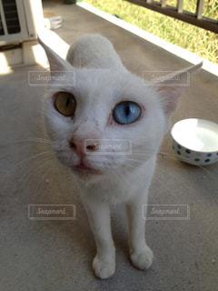 猫の写真・画像素材[565791]