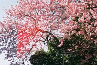 春の写真・画像素材[570785]