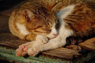 猫の写真・画像素材[576086]