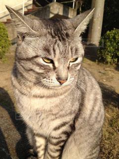 猫の写真・画像素材[576130]